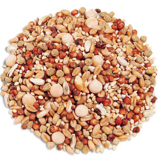 Grains, Fuel and Pigeon Racing Protein, Carbs & Fats