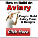 How to build an aviary: Easy to build aviary plans & designs . Click here.