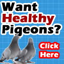 Want healthy pigeons? Click here.