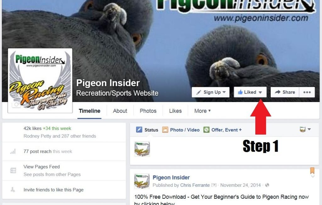 Join the Pigeon Insider Facebook VIP List in 5 Easy Steps