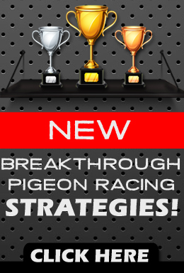 New breakthrough pigeon racing strategies! Click here.